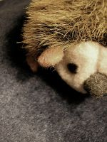 Tired hedgehog by farfromtime