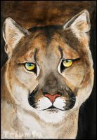 Cougar by Triumfa