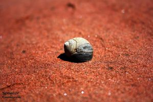 Just an empty shell by SpencerCameron