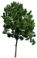 Tree corner 49 png by gd08