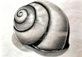 Shell Drawing by Namiiru