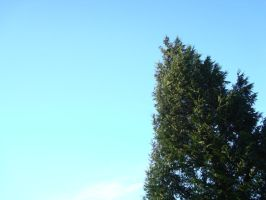 Tree reaching for the sky by tinani81600