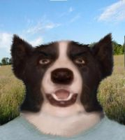jonstef1 as a colliemorph by psiguy