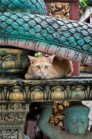 cats of siem reap by LunaFeles
