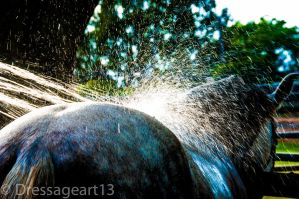 horse water shot by dressageart13