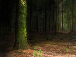 deep woods 6 by PhotoFrama
