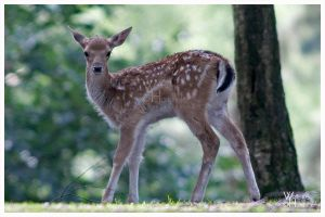 Bambi . . . . Lunch . . . mmh by W0LLE