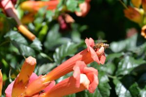 Bee and Ant, Chewing On Trumpet Nectar by Miss-Tbones