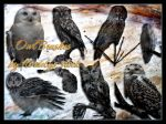 Owl Brushes by flordelys-stock