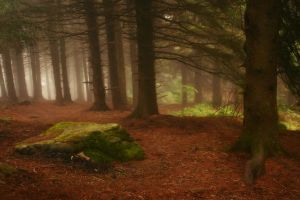 Among Friends by ncphotojunkie