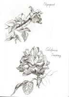 Roses 1 by ElianaIle