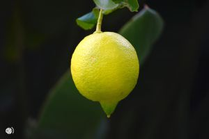 JUST A LEMON by Crike99