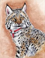 Amanda the Bobcat by ebonytigress