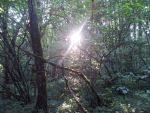 Sun in the Forest by Kuwathen