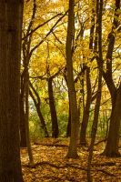 Yellow to Green Leaves by elvaniel