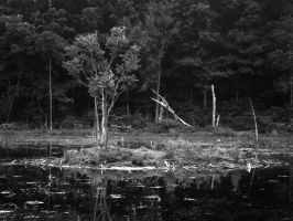 Stagnant Waters by miss-masami