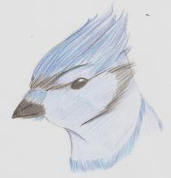 Blue jay .:request:. by animelovesmanga801