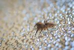 Jumping spider Profile by TanyaRudman