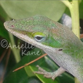 Texas Anole by Ani-elle
