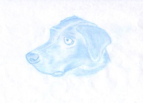 Dog Drawing - Cool name no? by Salter1701