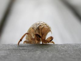 Cicada by flowerhippie22