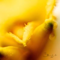 Yellow Dew by CayaStrife