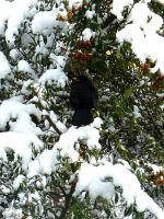 Bird in the snow by Misandrie