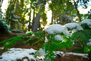 Snowy Branch by mark-flammable