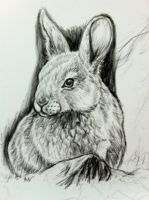 Bunny by Bisanti