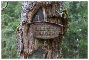 Forest Sign by neilwightman