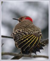 Flicker Male by barcon53