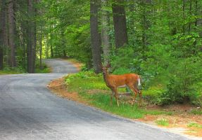 Where the Wilds meets the Road by wagn18