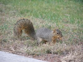 SQUIRREL by MTJforever