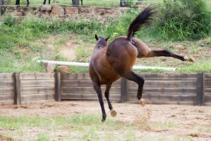 Km TB body twist Kicking out into air side/behind by Chunga-Stock