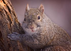 Nuts to you by DGAnder