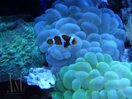 Nemo by Pentacle5