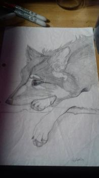 Old wolf drawing/doodle  by Broken-Copperpot073