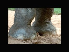 Elephant toes by lindabell