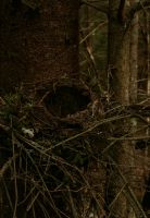 A nest by Willow-0