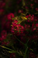 red by Ardel2W