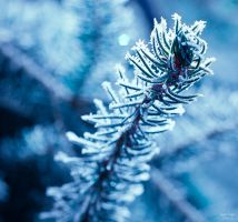 the frost during winter by 4GottenWords