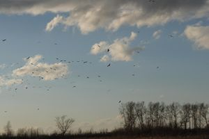 Birds in the sky by Tumana-stock