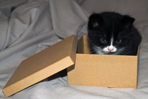kitty and box 2 by LucieG-Stock