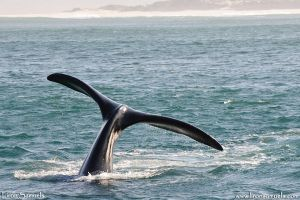Whale Tail by LironSamuels