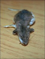 Mouse Pelt by nikkiburr