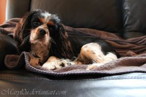 Gizmo' on the Couch by Maryl0u