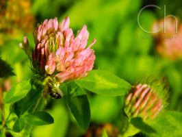 Pollination 2 by Champineography