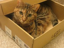 Sally in the box :P by VioletStar0131
