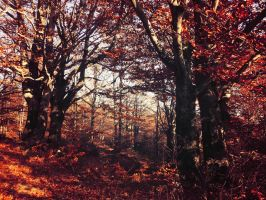 Autumn Reminiscence by Topielica666