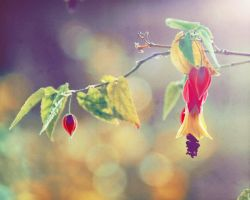 Hanging Teardrop II by EmiNguyen